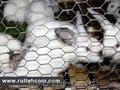 Сетка для кроликов,  птиц,  клеток,  вольеров,  заборов. Plasa pentru iepuri,  pasari